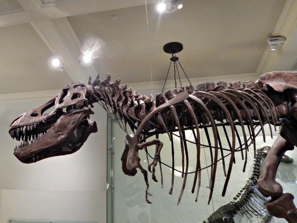 New York Natural History
